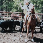 RANCH HORSE TRAINING: Setting up for success at a colt's first branding