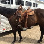 Seasoning Your Performance Horse Prospect