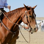 Dexterity in Horsemanship