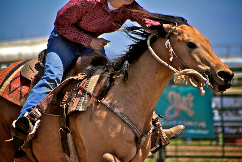 south dakota cowgirl photography, barrel racing, speed control