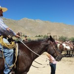 Ranch horses in Nevada