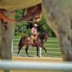 Riding with Buck Brannaman - A Series