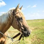 Creating a Soft Horse