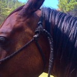 How To Fasten A Rope Halter