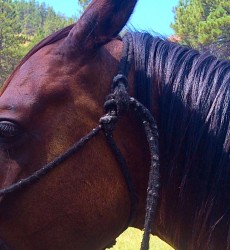 Proper knot on rope halter