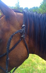 Backwards knot on a rope halter.
