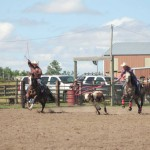 Team Roping and Memory Loss