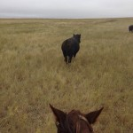 That's No Bull. Training Horses On The Ranch.