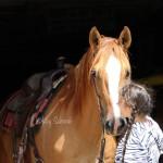 A Healing Horse.