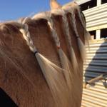Hauling Horses, Part 1