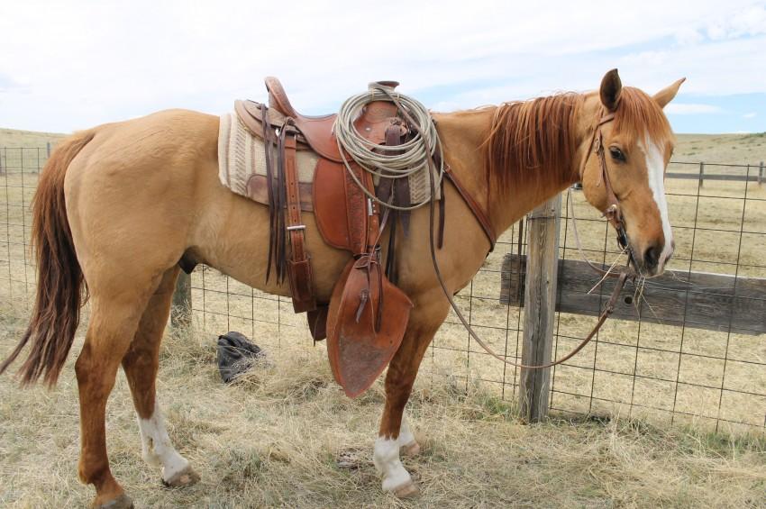 Same day, same horse, better angle.