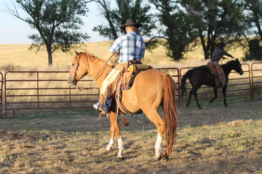 Horse is facing the evening sun. The golden light highlights this dun gelding.