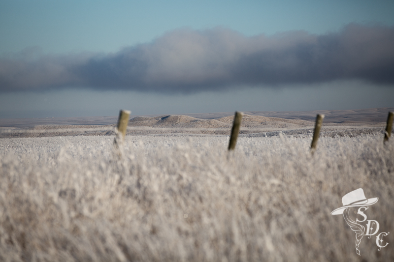 south dakota landscapes, south dakota winter, south dakota cowgirl photography, ranching, winter