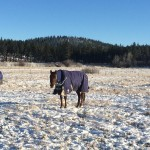 When do you start to blanket your horses?