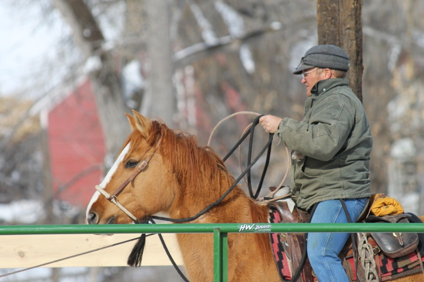 horse work in winter