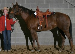 Barrel Horse For Sale
