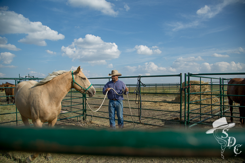 ground work, south dakota cowgirl photography, horse training