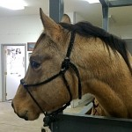 Equine Dentistry For Your Horse's Health