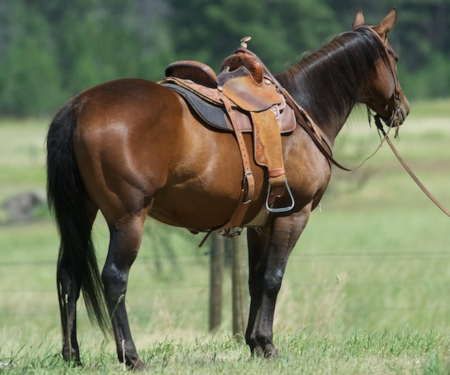 Finished Barrel Horse For Sale Cavvysavvy Com We