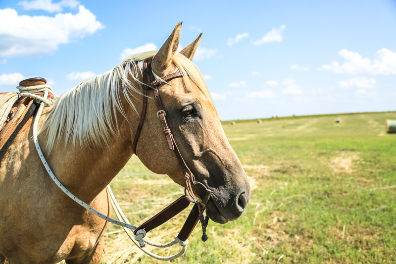 6 tips for first time horse owners