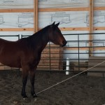 The Colt Cam: Roping the Feet Part 1
