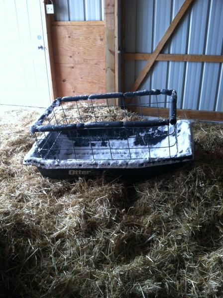 The calf-sled.