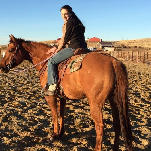 Horse for Sale: CLS Famous Pumpkin