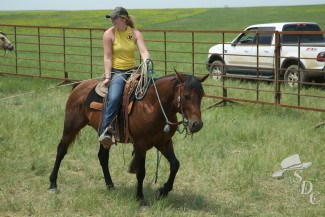 equine internships, calf branding, roping, ranch work