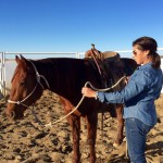 Leading Your Horse Series; Part 1
