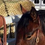 Quick, Easy Wrap to Tie Horses