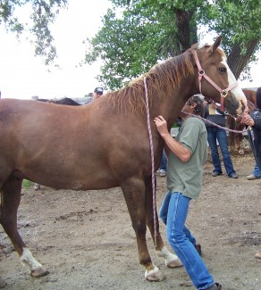 The neck lift is shown being done on a different horse.