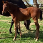 Featured Horse: 2015 Streak Of Fling X Daves Jet Ta Fame Filly