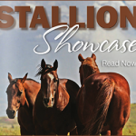 Look to TSLN for Your Next Stallion
