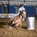 AQHA Stallion Fabulous Golden Jet