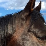 AQHA Stallion JD Look