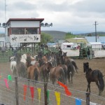 Jordan Valley Big Loop Rodeo 2015