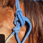 How To Tie A Rope Halter...Correctly