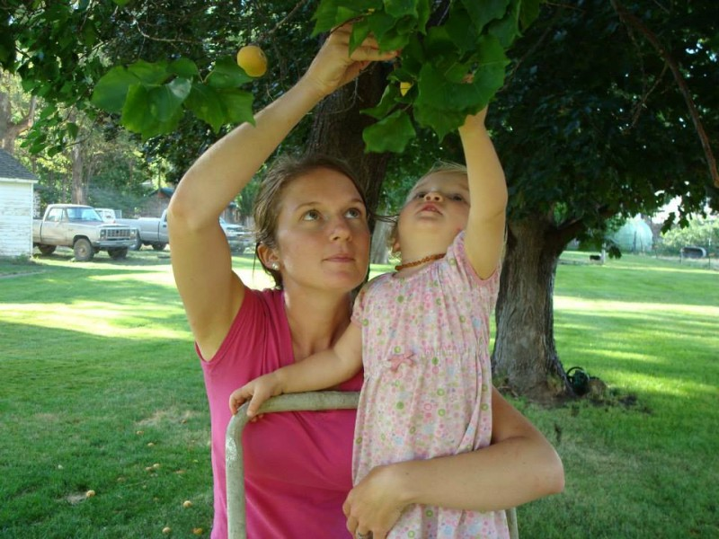 This is how I like to garden: picking fresh, ready-to-eat fruit from a tree that grew without any assistance from myself. I transfer the fruit directly from the tree to my mouth, picking just enough to satisfy my immediate demand. It's a very sustainable method.
