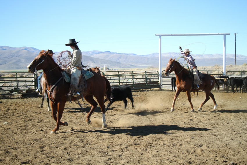 Here, fellow ranch wife Taren Hays has a calf necked at a branding last fall while I come up for a heel shot.