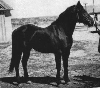 Joe Hancock when owned by Burnett Ranch (photo from AQHA)