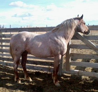 A stallion enclosure needs to be safe for the stallion and anything on the other side of the fence from him.