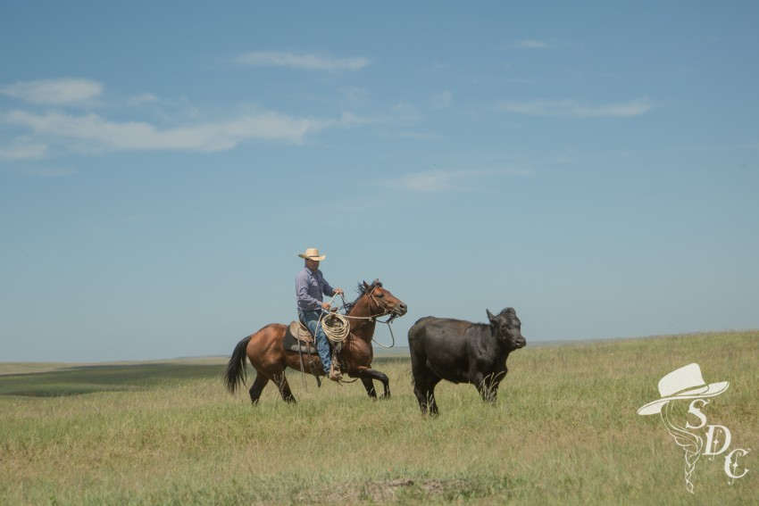 south dakota cowgirl photography, roping, buckaroo, cowboy, rodear, working out of the rodear