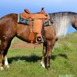 Featured Horse: Twombly Horse Sale - July 25th
