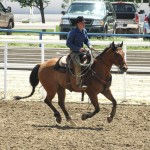 Full House Elite Performance Stock Horse Sale Results
