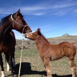 Weaning Colts Part 1; Veterinarian Interview