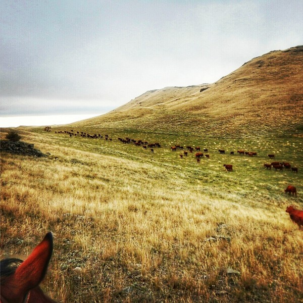A good view always includes cows and horses.