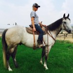 Featured Horse For Sale- Sunshines Merridoc