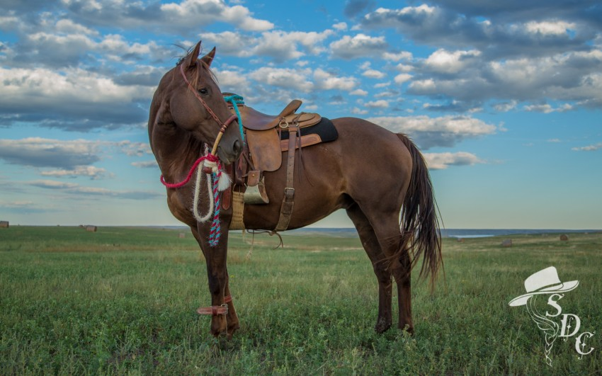 hackamore horse, handmade mecate by The Colorful Cowgirl