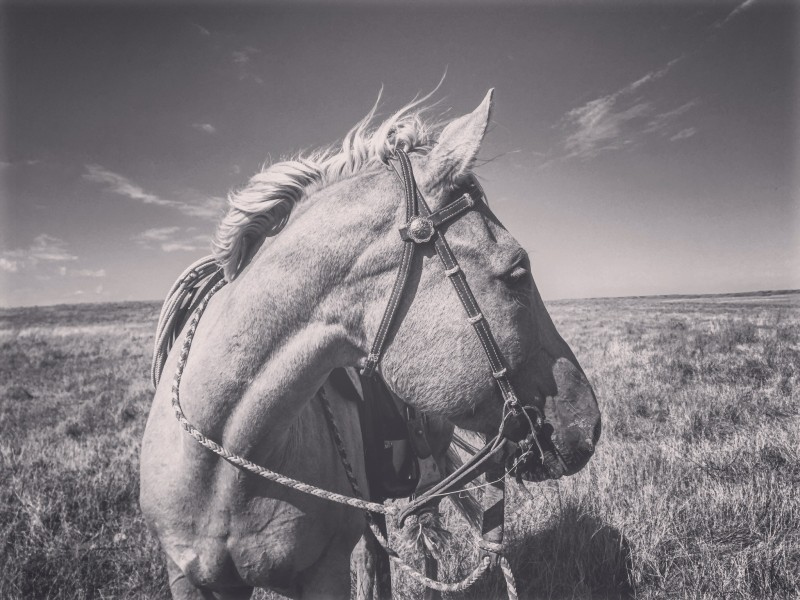 South Dakota cowgirl photography, western photography, ranch life, ranch horses