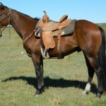 Featured Horses For Sale: Sixes So Shiney